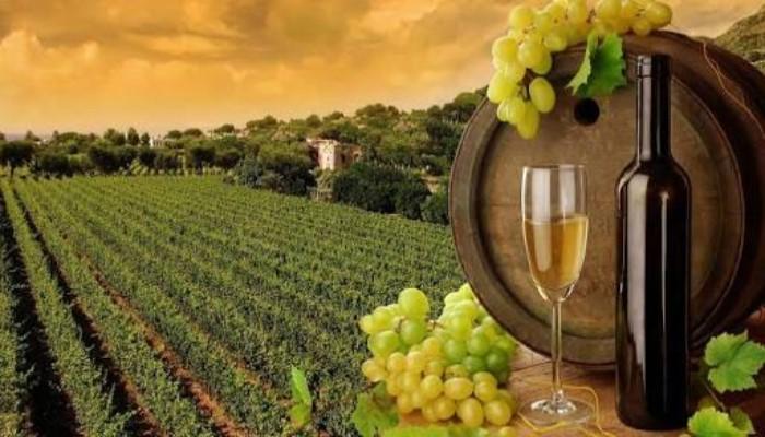 Grape Wineyard